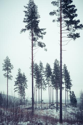 Nachts ist Wald